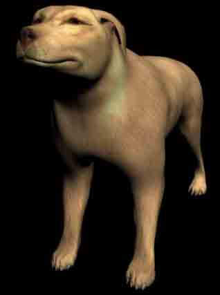 Big Yellow Dog 3D Model of