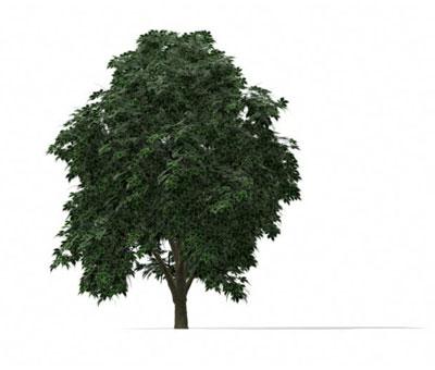 Plantes 010 arbres 7 3d model download free 3d models download for Plante 3d gratuit