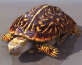 Tortues animaux 6