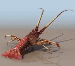 Lobster animaux  17