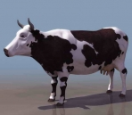Vaches animaux  29